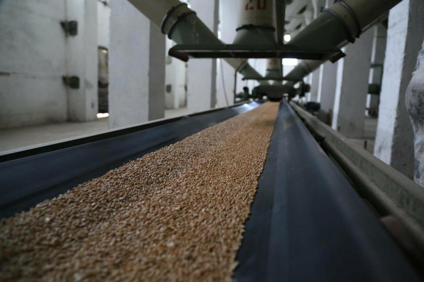 Из-за засухи в Крыму придумали пшеницу, которая растет без воды (ФОТО), фото-2