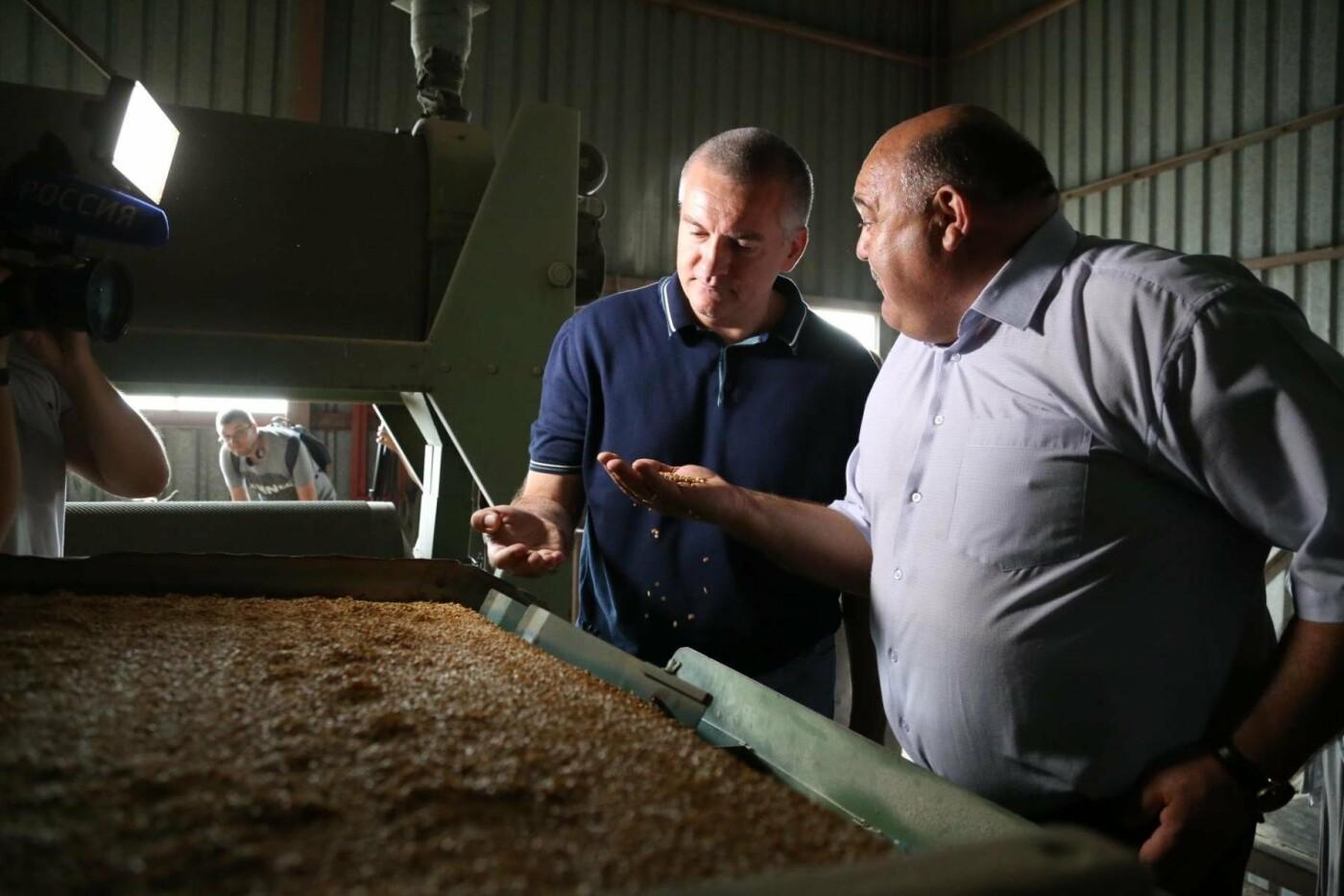 Из-за засухи в Крыму придумали пшеницу, которая растет без воды (ФОТО), фото-4