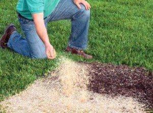 Как посеять газонную траву правильно